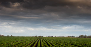 Arable field beneath storm Stock Photos