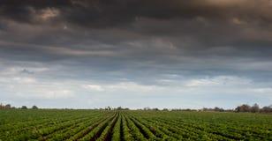 Arable field beneath storm. Arable field beneath an autumn stormy sky Stock Photos