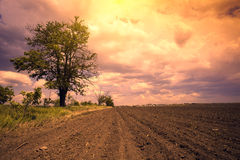 Arable field with cloudy sky. Arable field with pink dramatic cloudy sky and tree Stock Photo