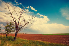 Arable field with cloudy sky. And sun and trees in the left Royalty Free Stock Image