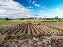 Arable field. Countryside landscape with arable field Stock Image