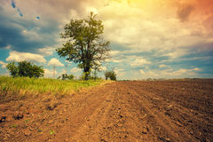 Arable field. With dramatic cloudy sky and tree Royalty Free Stock Image