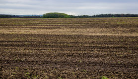 Arable field farm. Agricultural landscape of spring arable and green areas Stock Photos