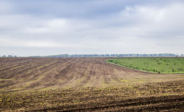 Arable field farm. Agricultural landscape of spring arable and green areas Royalty Free Stock Images
