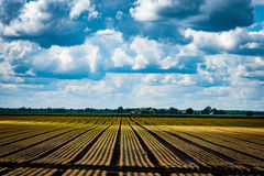 Arable field. Newly planted arable field in the Fens with spring clouds above Royalty Free Stock Photography