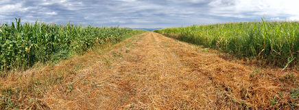 Arable field panorama. Agriculture theme Royalty Free Stock Photo
