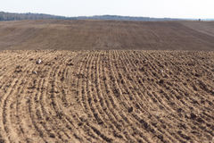 Arable field. Plowed agricultural arable land. Prepared land for sowing of crop Stock Images