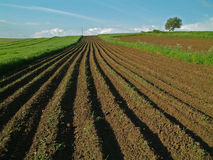 Arable field in spring Stock Photos