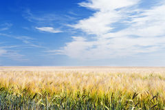 Arable Field under Blue Sky. Shot of an Arable Field under Blue Sky Royalty Free Stock Photography