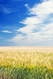Arable Field under Blue Sky. Shot of an Arable Field under Blue Sky Royalty Free Stock Photos