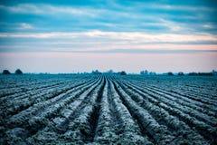 Arable field in winter Stock Image