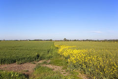 Arable fields under blue sky Stock Images