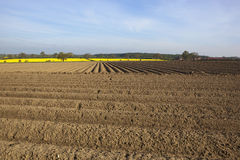 Arable fieldscape Royalty Free Stock Photo