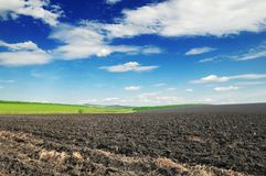 Arable land. And blue sky Stock Photo