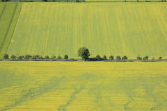 Arable land. Aerial view of farmland and some flowering rapeseed fields Royalty Free Stock Photography