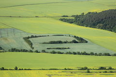 Arable land. Aerial view of flowering arable land and rapeseed fields Stock Photos