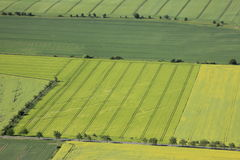 Arable land. Aerial view of flowering part of arable land and rapeseed fields Stock Photography