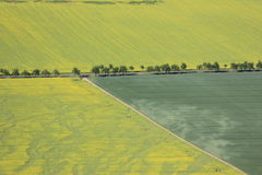 Arable land. Aerial view of farmland and flowering rapeseed fields Stock Image