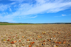 Arable land. Plow the arable landscape against the blue sky Stock Photos