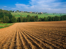 Arable land. For wheat growth Stock Image