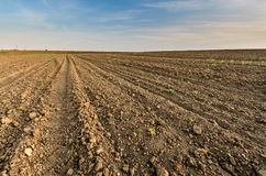 Arable land. Arable agricultural land under the blue sky Stock Images
