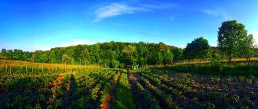 Arable land. With beautiful sky stock photos