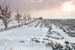 Arable land covered in snow Stock Photos
