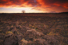 Arable land. With dramatic sky before sunrise Stock Photos