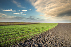 Arable land field. Arable landl field and sunset Stock Photo