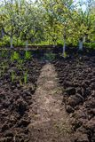 Arable land and fruit trees in spring garden. Spring landscape. Path in garden Royalty Free Stock Photo