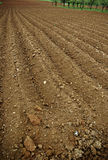 Arable Land. The furrows in the field of arable land ready for spring planting Royalty Free Stock Photos