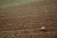 Arable Land. The furrows in the field of arable land ready for spring planting Royalty Free Stock Images