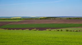 Arable land and green grass fields on clear blue sky. Panorama landscape. Green meadows. Arable land and green grass fields on clear blue sky. Agriculture Royalty Free Stock Photos