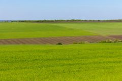 Arable land and green grass fields on clear blue sky. Panorama landscape. Green meadows. Arable land and green grass fields on clear blue sky. Agriculture Stock Images