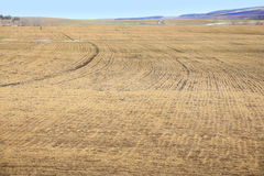 Arable land after the melting snow. Arable land after the melting snow in early spring Stock Photos
