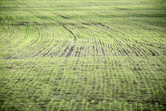 Arable land after the melting snow. Isolated arable land after the melting snow in early spring Royalty Free Stock Photo