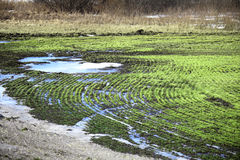 Arable land after the melting snow. Isolated arable land after the melting snow in early spring Stock Image