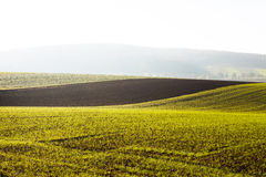 Arable land in morning sunlight Stock Photography