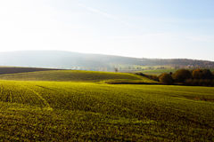 Arable land in the morning sunshine Royalty Free Stock Images