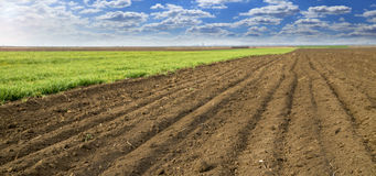 Arable land. Next to growing wheat field with blue clouds Stock Photo
