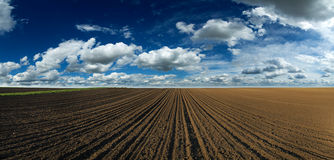 Arable land panorama. Over blue sky with white clouds Stock Images