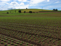 Arable land. Photographed in Switzerland Stock Photo