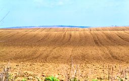 Arable land prepared for planting. Field prepared for planting grain, corn or sunflower Royalty Free Stock Photos