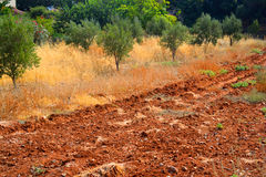 Arable land. Red arable land in Malia on Crete island, Greece Royalty Free Stock Images