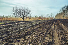 Arable and land in spring. Arable and land in early spring Stock Photography