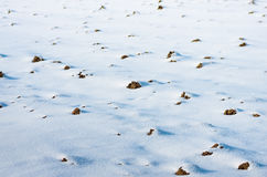 Arable land under snow. Prepared for spring field work the arable land in the snow Stock Image