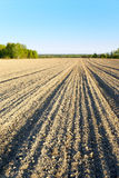Arable  land and woods. Spring evening in the Central Russia Royalty Free Stock Photo