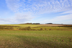 Arable landscape in autumn Stock Images