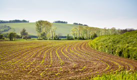 Arable spring land. Green spring farmland. Sunny rural spring la Royalty Free Stock Image