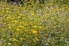 Arable Wild Flowers Stock Photo